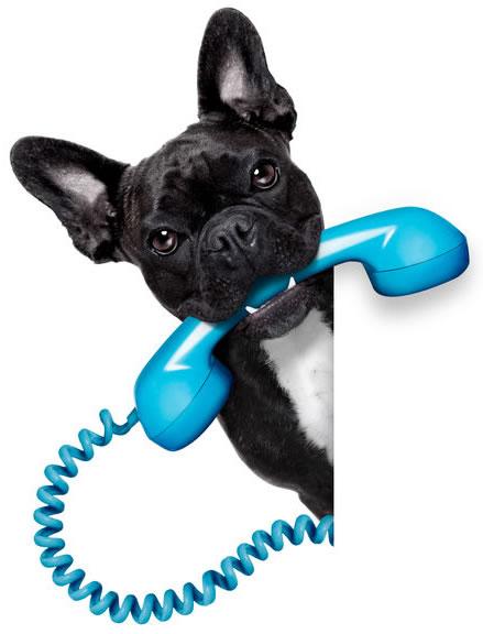 Dog-Phone